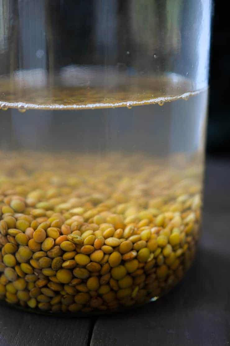 How to sprout lentils - it's easy, cheap and totally worth it! Tasty and versatile, sprouted lentils are nutritional powerhouses!